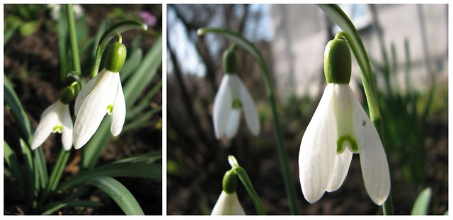 sping: white