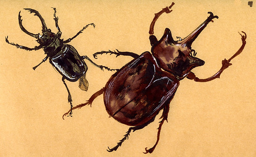Beetles at the Museum
