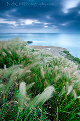 Ocean Breeze (Nick Chill Photography) Tags: california blue sunset green grass photography evening nikon pacific sandiego fineart oceanbeach sunsetcliffs stockimage d300s tokina1116mm nickchill