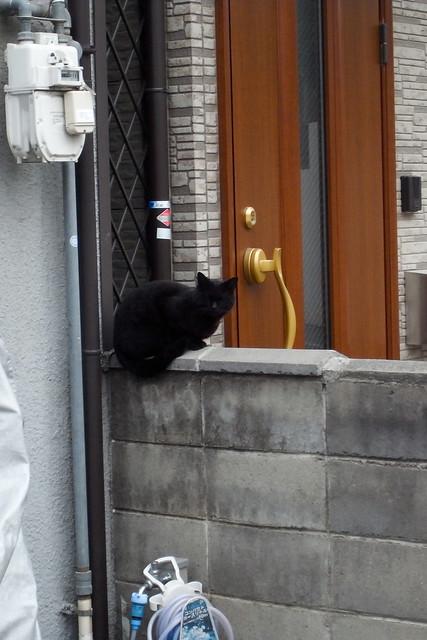 Today's Cat@2011-04-08