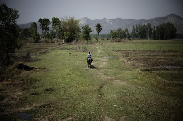 Carolin Weinkopf, nepal, india, boy riding a buff