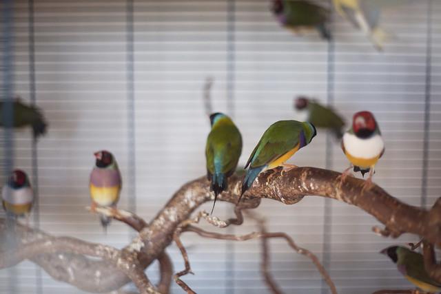 tea and birds.
