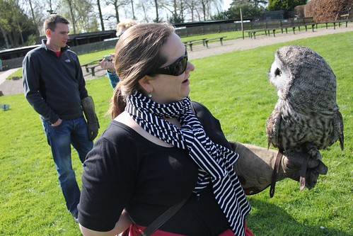 Falconry Day_1393