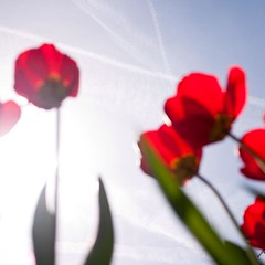 Inside Spring (Ethan in Zrich) Tags: red sky colors spring blurry tulips airplanes zrich brightness uplifting aspiring hngg