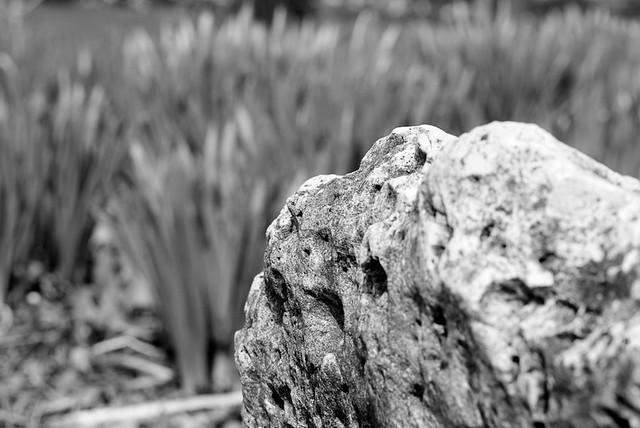 Ogden gardens april 2011