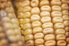 Pannocchie (Pachibro Portfolio) Tags: canon eos corn mais corncob pannocchia 50d infiorescenza canoneos50d scattifotografici pasqualinobrodella pachibroportfolio pachibro racemocomposto