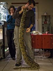 Orvalleke (Robert Mrava) Tags: pet snake boa constrictor