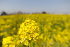20110319 Floral garden 3