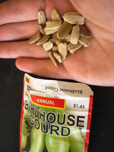 gourds seeds