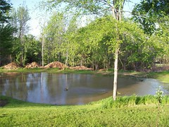 Pond area after