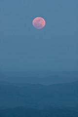 april moonrise pink and blue (R. Keith Clontz) Tags: closeup northcarolina bluesky moonrise april blueridgeparkway pinkmoon mountainridges bluelandscape beaconheights blueridgepics roanmountainphotography northcarolanamountainsphotography roanmountainphotographer