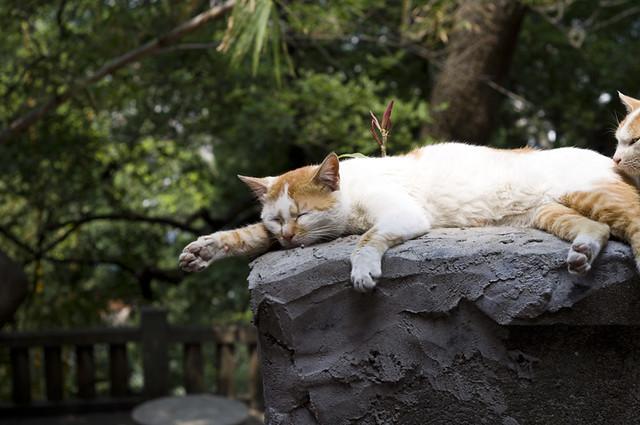 销魂的睡姿