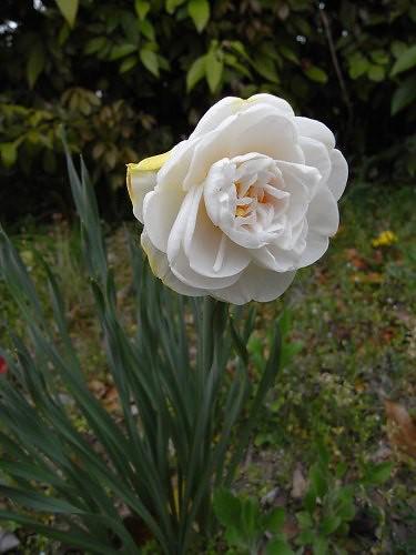 春の花々@明日香村-24