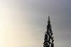 pointing to the sky (Luis Eduardo ®) Tags: sky tree pine araucaria luismosquera