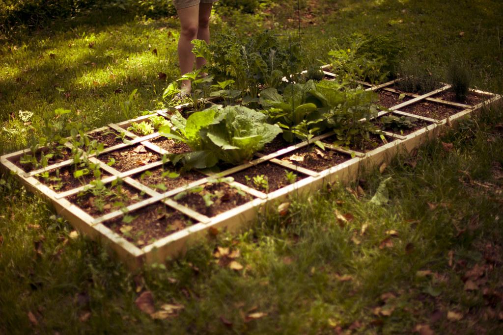 Mon's Garden