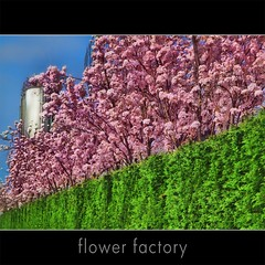 The flower factory (jinterwas) Tags: pink flower holland green netherlands spring groen factory tank blossom nederland free silo cc creativecommons lente printemps bloesem fabriek roze freetouse