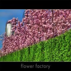 The flower factory (jinterwas) Tags: pink flower holland green netherlands spring groen factory tank blossom nederland free silo cc creativecommons lente printemps bloesem fabriek roze freetouse
