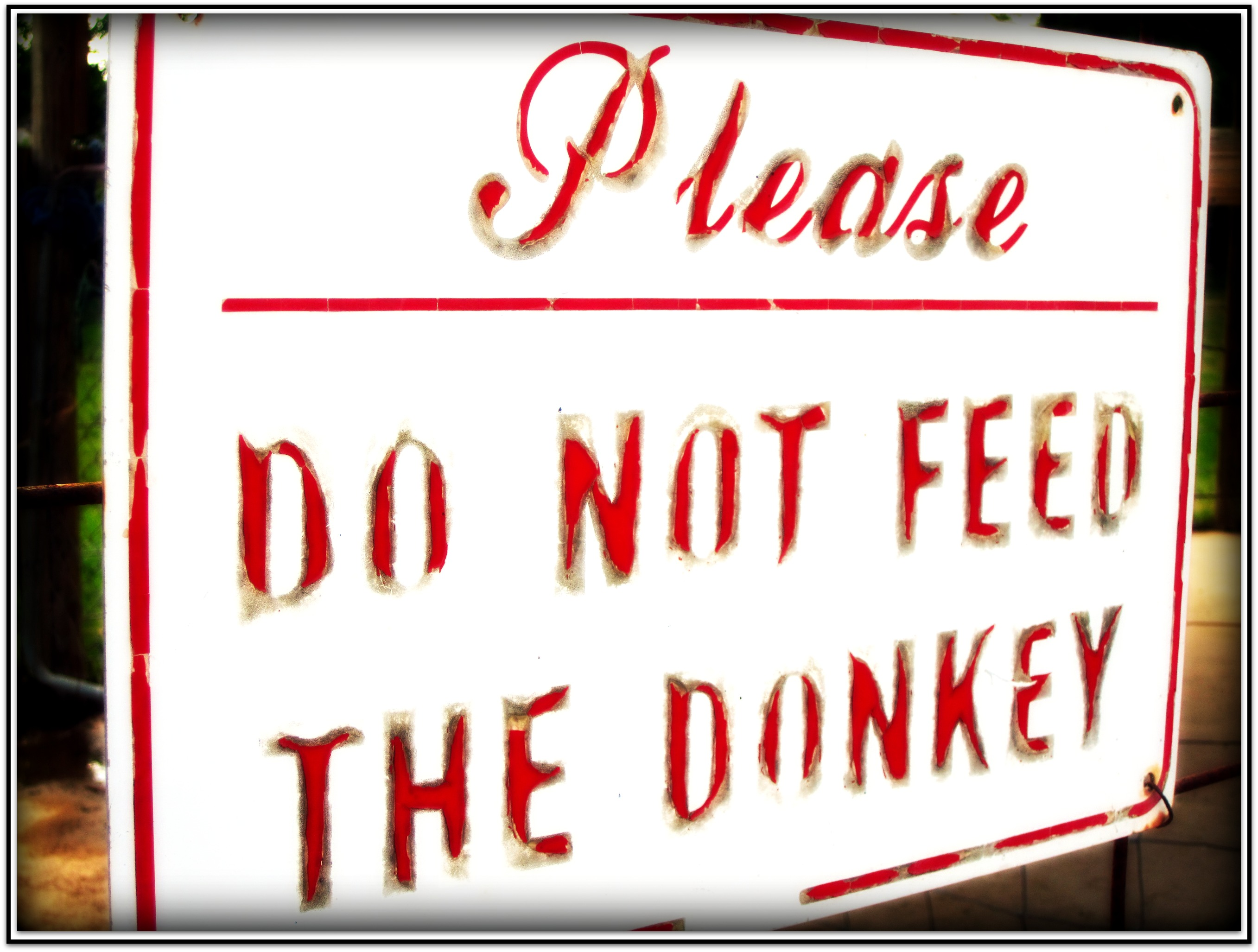 Please Do Not Feed the Donkey