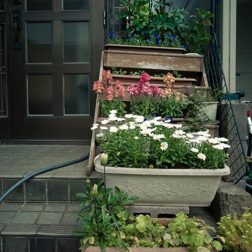 Step Up Garden with Hose, Minami Kasai