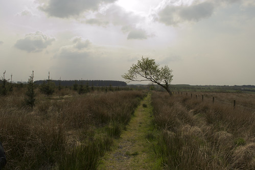 The old road to Sorn