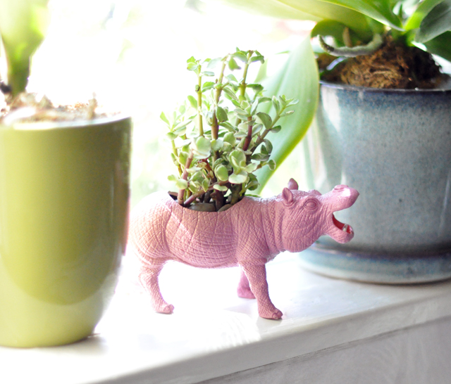 Penelope pink hippo succulent planter