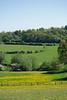 Stonesfield landscape #4