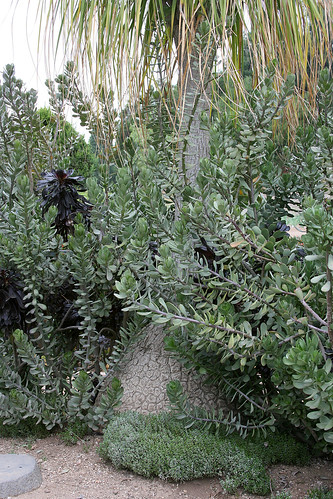 huntington grey black plantings