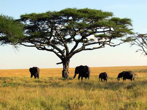 Foto Tanzania - Invito alla Tanzania