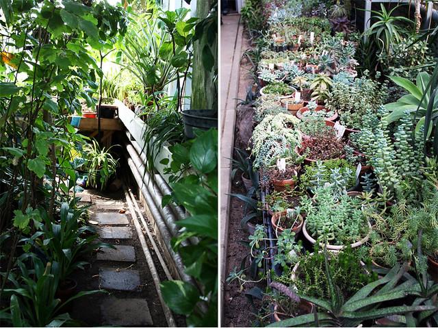 Botanikos sodas5
