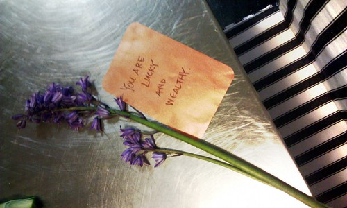 Cut bluebells and a card that says You Are Lucky and Wealthy