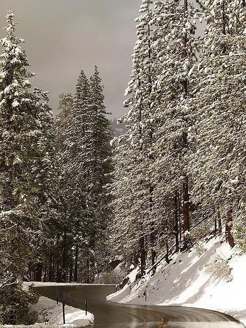 Snowy Wawona Road