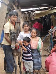 Mardoqueo and their pony