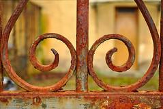 Rusty, crusty curls ii (DeniseJC) Tags: door fence rusty curls courtyard nails hff