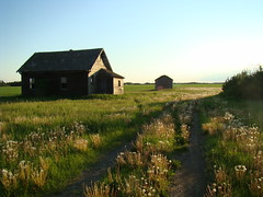 still standing (skylinejunkie) Tags: road light summer house canada abandoned long farm trail alberta homestead prairie dandelions abphotobloggers ghostfarm cans2s