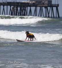 DogSurf_Loews2011_104