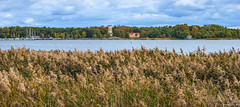 Kiikartorni II (Joni Mansikka) Tags: autumn nature sea shore outdoor landscape trees leaves colours reeds clouds buildings tower boats balticsea rauma suomi finland tamronspaf2875mmf28xrdildasphericalif