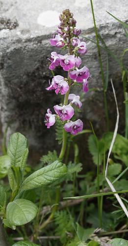 Flower_16-06-08_