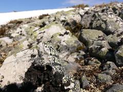 Willmore Wilderness Park (Alberta Parks) Tags: willmore wilderness area willmorewildernesspark mountains protectedarea alberta tree pine alpine alpinenaturalsubregion rocks lichen crustoselichen