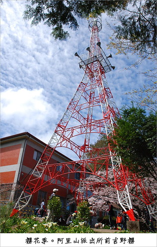 Tower and Yoshino Cherry Tree