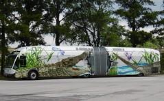 LYNX Gator Wrapped NABI (traveling around) Tags: bus orlando florida gator north ad wrapped american transit fl accordian 50 60 articulated lynx industries brt nabi 27610