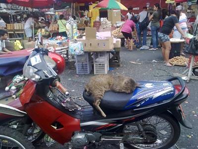 motorbike cat in Divisoria