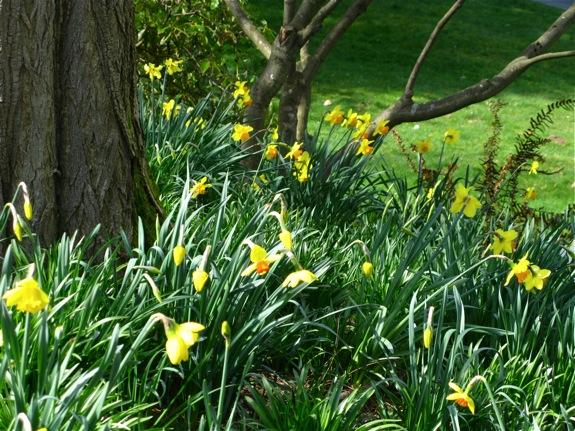 queen elizabeth park yellow 005