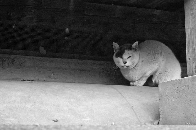 Today's Cat@2011-04-11