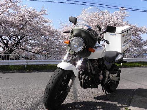 バイク便 桜 所沢市 2011-04-12 008