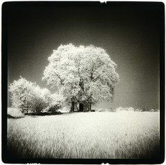 (The lesser traveled seas) Tags: holga infrared lith ilford se5 mt1 efke 2bath selen moersch catechol photochemie ir820aura ilfobromgalerie