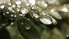balance (buzzygirl) Tags: water la droplets hiking liquid rubiocanyon