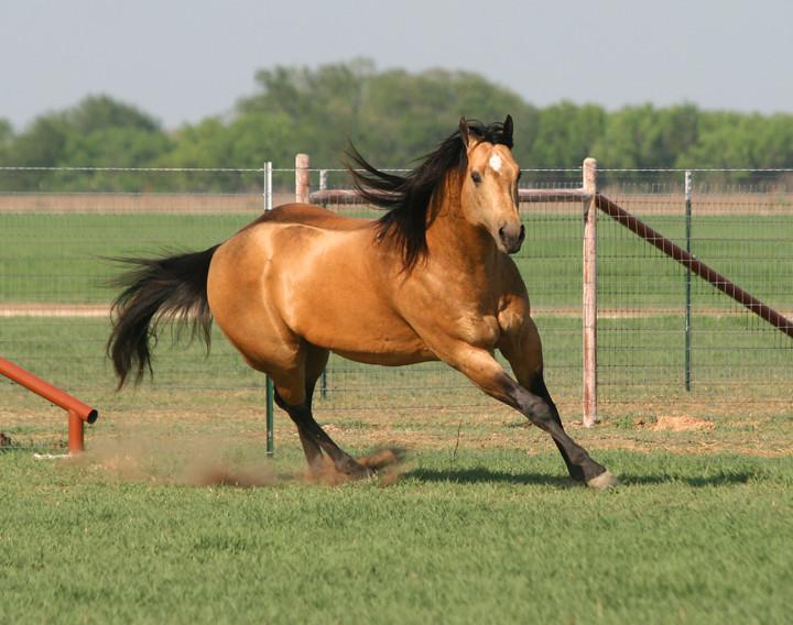 Roping Horses And Barrel Horses At Namgis Quarter Horses