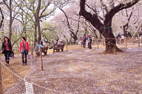 洗足池公園・桜山