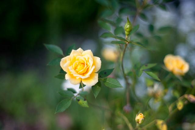 FlowerGarden2011-11
