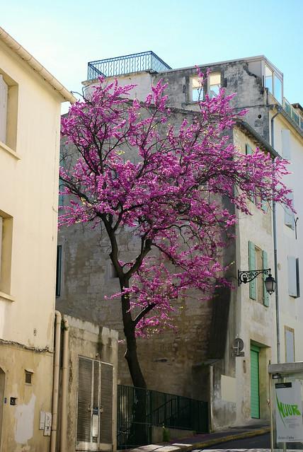 Arles, Soutern France